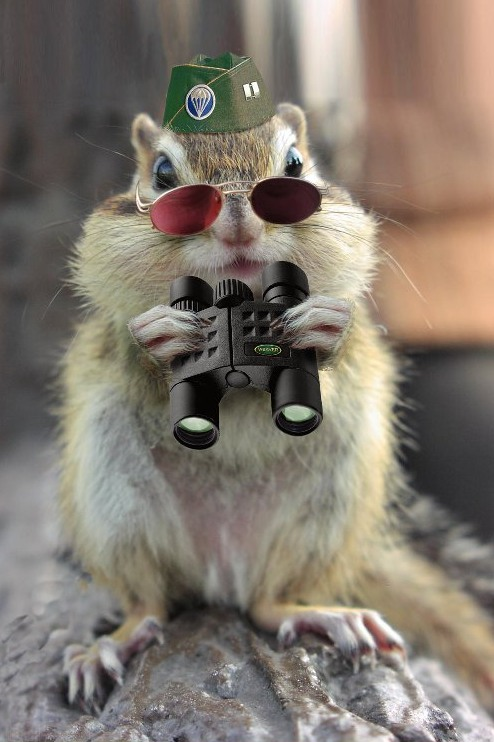 SpySquirrel.jpg